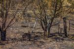 San Juan Grass Fire