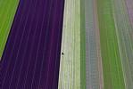 Salad Fields Aerial (V2)