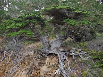 Point Lobos (with Olympus E-P1)
